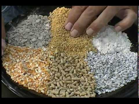 What To Feed Chickens Strong Eggs Good Poultry Health Chick Feed