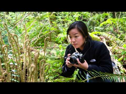 Environmental Science in the Forest and on Mt. Rainier