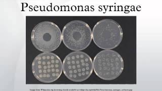 Pseudomonas syringae HD