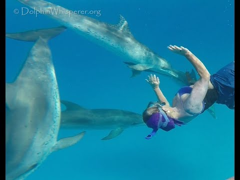Catherine swimming with wild dolphins on her birthday :)