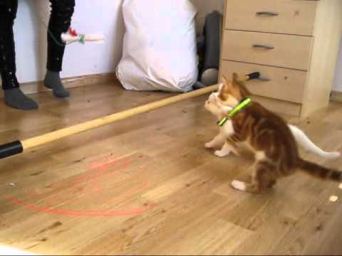 Cat jumping fail!xD