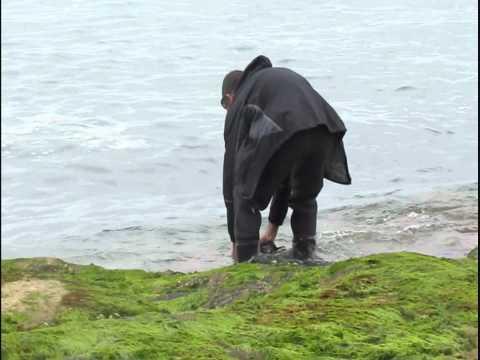 Torness fishing-Bass and Pollock-Sea fishing U.K.