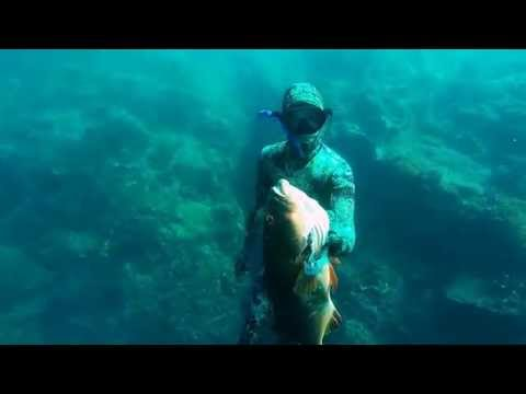 Massive Bar Cheeked Coral trout spearfishing - Dan Danowski