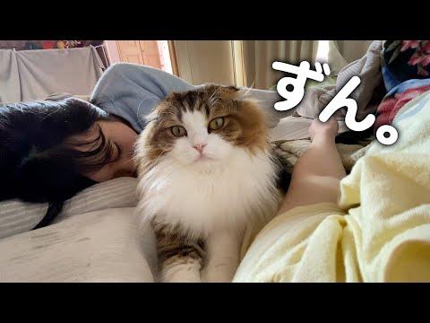 3日ぶりに帰宅したママと娘の間に朝からじっと居座る猫