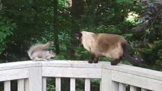 Cat meets squirrel