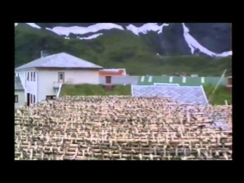 NORWAY 95 - 63 Stockfish - Seagulls