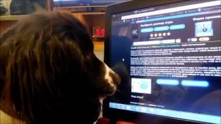 Собака и ноутбук