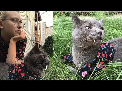 Кошка вампир стала очень за 18 сентября