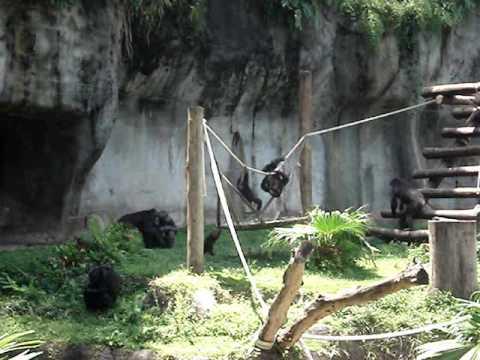 Fundação Parque Zoológico de São Paulo / Sao Paulo Zoo Clips