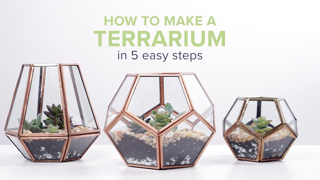 How To Make A Terrarium In 5 Easy Steps Proflowers