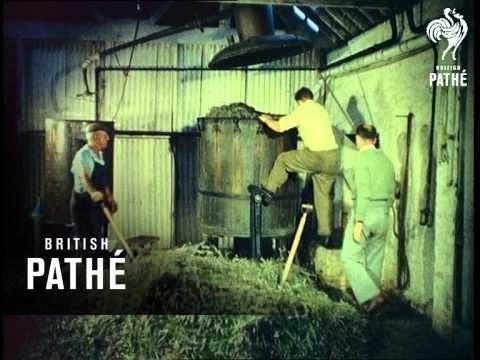 Lavender Harvest (1958)