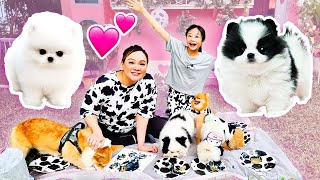 Bug & Sequin Have New Puppies! | Little Big Toys