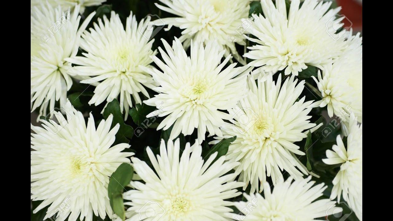 como hacer centros florales para cementerio