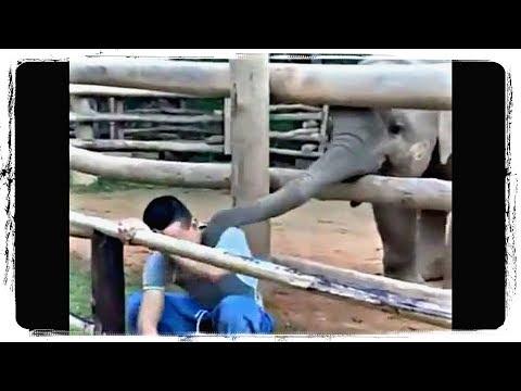 ПРИКОЛЫ С ЖИВОТНЫМИ   FUN WITH ANIMALS #566