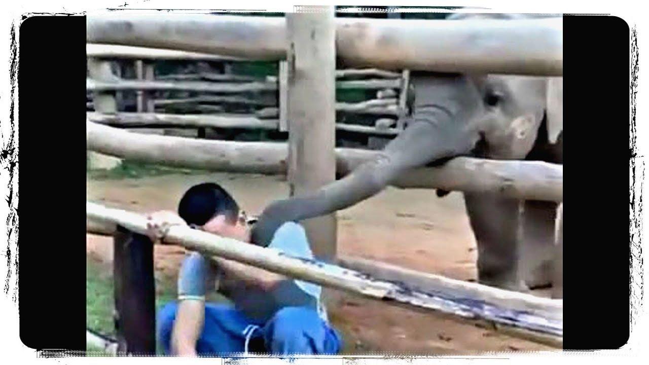 Приколы с Животными | Fun With Animals 566 | Заработок Выполняя Задания на Автомате