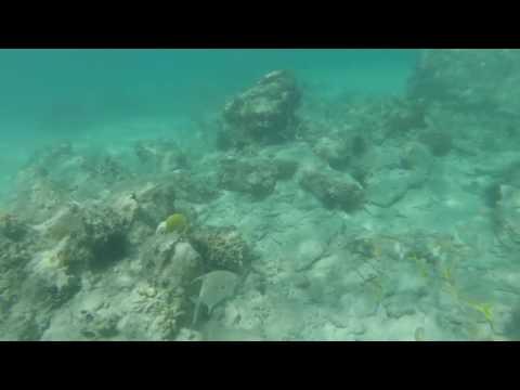 Francis Bay 5