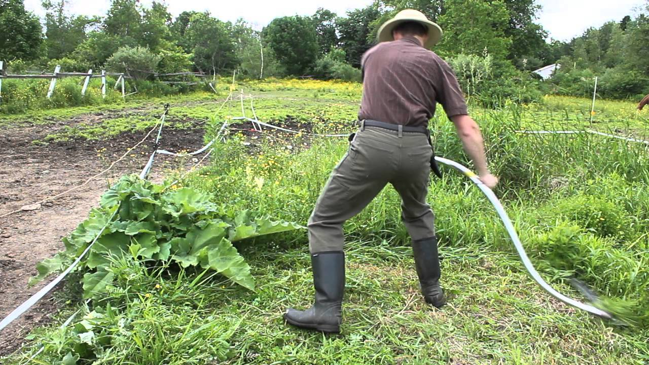 A Modern Seymour Midwest Tools Scythe At Work!   YouTube