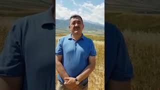 Обращение Албека Ибраимова
