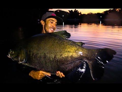 Pesqueiro LAGO AZUL - Bati meu Record nos Tambacus Gigantes  - Amental Fishing