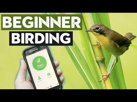 Things ALL Beginner Birders Should Do