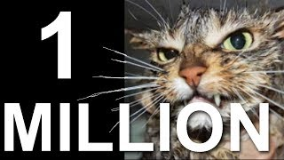 1 MILLION - PAROLE DE CHAT