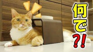 落ち着くの?トンネルスタイルでまったりくつろぐ猫