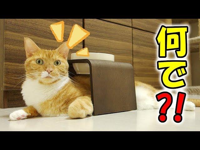 猫はどうしてこうなった?おもしろい場所で寛ぐ猫 / why is funny cat there ?