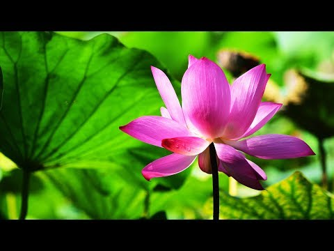 Morning Relaxing Music - Meditation Music, Healing Music, Yoga Music, Study Music (Bolton)