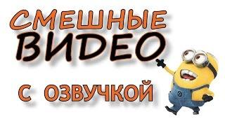 Смешные видео с озвучкой