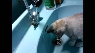 Как научить котенка пить воду, если он не умеет