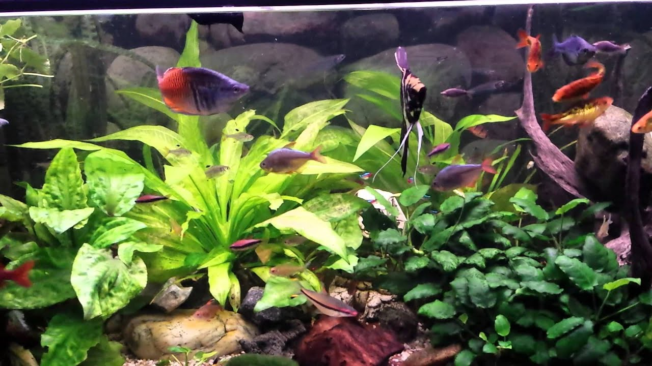 fish tank 500 liter s sswasser aquarium 500 liter youtube. Black Bedroom Furniture Sets. Home Design Ideas