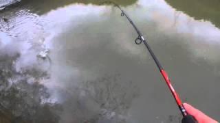 Prise d'une petite truite a la cuillere (pêche)