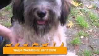 6 Monate Alter Mischlingshund Sucht Neues Zuhause