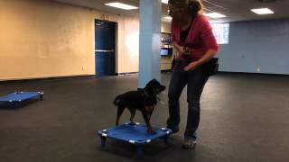 Puppy Training Place Command | K9 Connection Dog Training Buffalo Ny