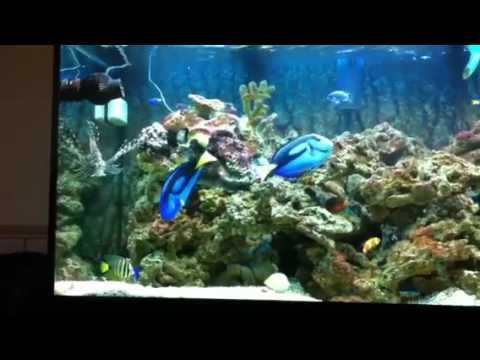 marine aquarium juwel rio 300 youtube. Black Bedroom Furniture Sets. Home Design Ideas