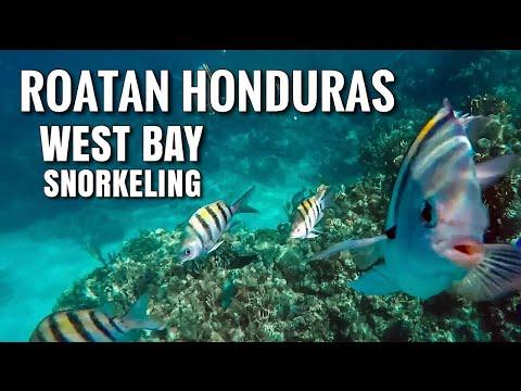 BEST Offshore Snorkeling in the Caribbean! West Bay in Roatan, Honduras