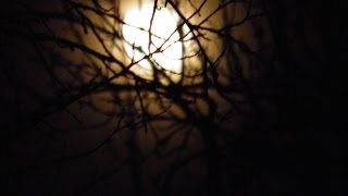 Download Privighetoare, cantec la miezul noptii .Midnight song, Nightingale