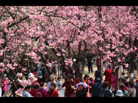 Tourisme floral en Chine