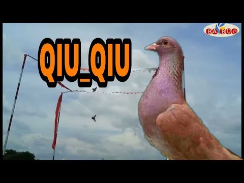 8000 Gambar Burung Qiu Qiu Paling Keren Gambar Id