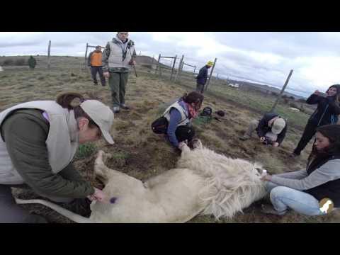 Wildlife Veterinary Course & Practical Experience | Wild Spirit 2015