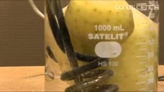 Usando batatas para entender diferenças entre o metabolismo de animais grandes e pequenos