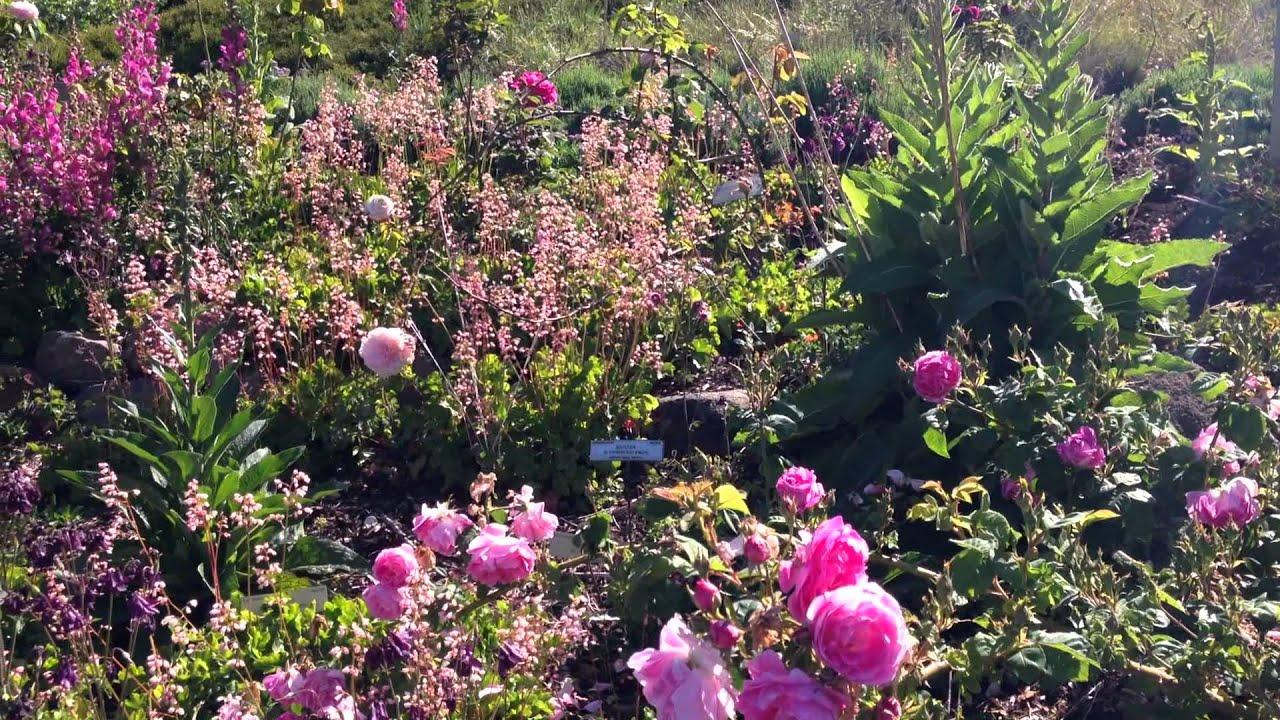 Charmant Garden Of Old Roses UC Botanical Garden At Berkeley