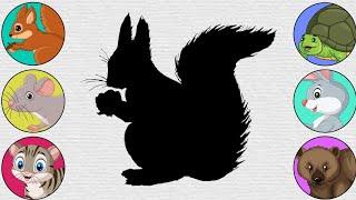 Wild ANIMALS, Squirrel, Tortoi…