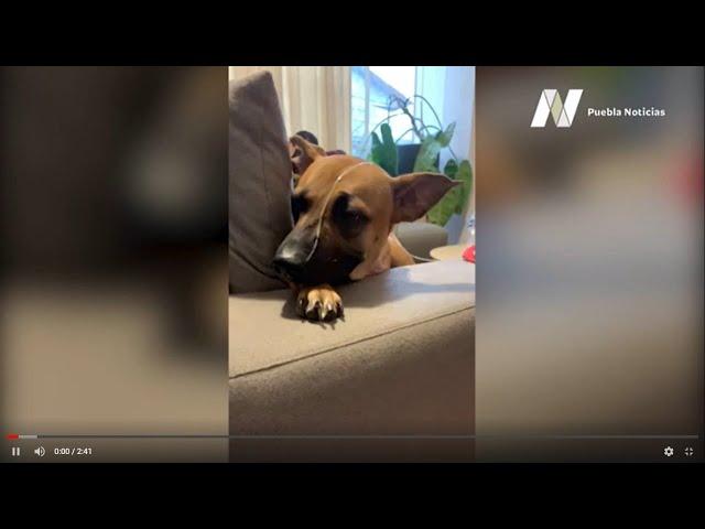 Cardiólogos dieron a este perrito una nueva esperanza de vida
