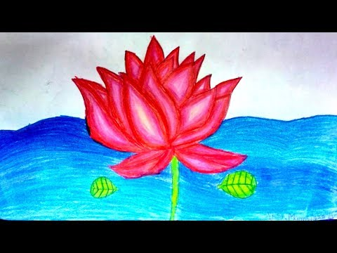 How to draw Lotus ?