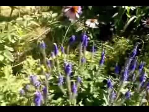 Montevideo Minnesota Garden Tour  with Soothing Music