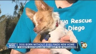 Local puppy born without eyes finds forever home, thanks to local volunteer