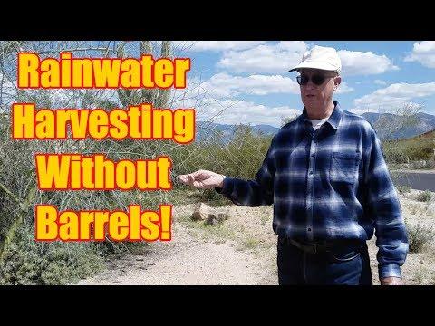 Desert Rainwater Harvesting System at Home - No Barrels Needed!