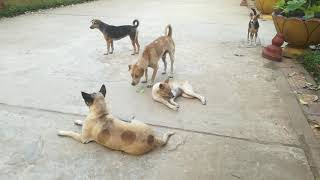 Dogs Running And Playing - Dogs Videos - Cute Dogs - Funny Dogs Videos