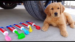 Crushing Crunchy & Soft Things by Car! Puppy Experiment: Car vs Coca Cola & Balloons